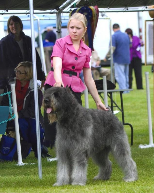 Anchorage Dog Show Egan Center