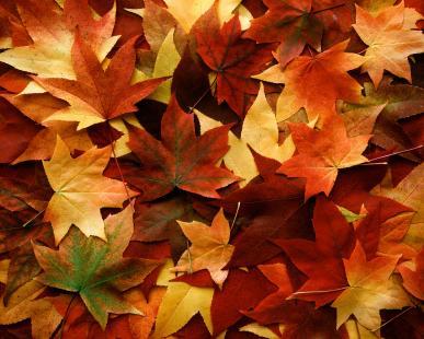 Fall Foliage Festival - Talihina, OK - Oct 26, 2019